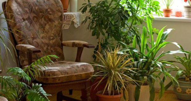 Домашние средства для подкормки и защиты комнатных цветов